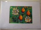 Passion Fruit<br />A5 appx landscape<br />£10       SOLD